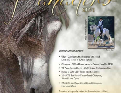 The P.R.E. Horse Magazine (Special Edition 2014)